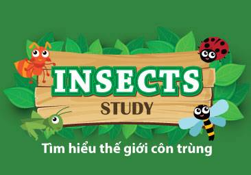 kindy-city-insects-study