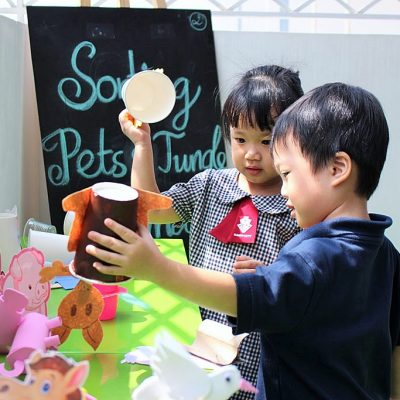 truong-mam-non-kindy-city-pet-study (2)